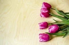 Frontière verticale des tulipes entrouvertes de pourpres de fleurs Images stock