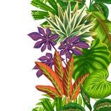 Frontière verticale sans couture avec des plantes tropicales et des feuilles Fond fait sans masque de coupage Facile à utiliser p Images stock