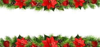Frontières de Noël avec les fleurs de pionsettia, les brindilles de pin et le De rouges Images stock