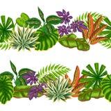 Frontières sans couture avec des plantes tropicales et des feuilles Fond fait sans masque de coupage Facile à utiliser pour le co Photo libre de droits