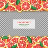 Frontières sans couture horizontales de fruit mûr de pamplemousse Dirigez la bande sans fin large et étroite de carte d'illustrat illustration de vecteur