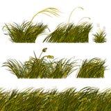Frontières vertes d'herbe de steppe réglées Photo libre de droits