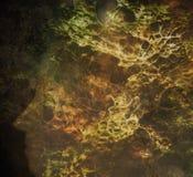 Fronti della foresta Immagini Stock