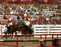 Frontier Days Bronco Buster. A cowboy riding a bucking bronco at the Cheyenne Frontier Days Rodeo royalty free stock image