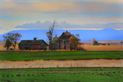 Frontier Farmhouse in Wheat Field. An old abandoned desolate frontier farmhouse, dead trees sitting in middle of wheat fields. Shallow depth of field Stock Image