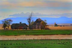 Frontier Farmhouse in Wheat Field stock image
