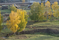 Frontier village. A small village just north of most of Xinjiang, China, is called the white buses, live tuwaren, Kazak and Mongolian people Stock Photos