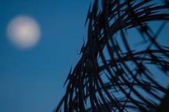 Frontiera a fisarmonica del cavo Fotografia Stock Libera da Diritti