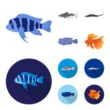 Frontosa, cichlid, phractocephalus hemioliopterus.Fish set collection icons in cartoon,flat style vector symbol stock. Illustration Royalty Free Stock Photos