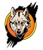 frontowy koloru wilk Fotografia Stock
