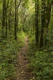 Frontowy pionowo widok droga polna po środku lasu otaczającego drzewami obrazy stock