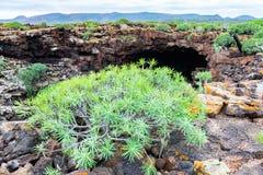 Frontowy wejście Cueva De Los Verdes, zadziwiająca lawowa tubka i atrakcja turystyczna na Lanzarote wyspie, Hiszpania fotografia royalty free