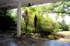 Frontowy wejście zaniechany obdrapany hotel całkowicie przerastający z lasową roślinnością i drzewami z śmieci i spadać liśćmi fotografia royalty free