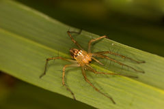 Frontowy widok bluza pająk Zdjęcie Stock