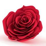 Frontowy widok czerwieni róża Zdjęcie Royalty Free