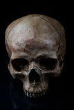 Frontview human skull  Stock Photo