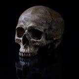 Frontview human skull  Stock Image