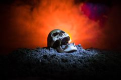 Frontview of human skull open mouth on dark toned foggy background. Horror concept. Empty space royalty free stock photos