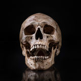 Frontview human skull open mouth isolated. Frontview of human skull open mouth reflect on isolated black background Stock Photos