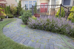 Frontyard Garden Paver Walkway with Heather Flower. Frontyard Garden Curved Paver Walkway Royalty Free Stock Images