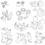Froots and berries vector set Royalty Free Stock Images