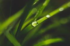 Frops de pluie sur les feuilles d'herbe verte photographie stock