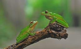Frosch, Stockbilder