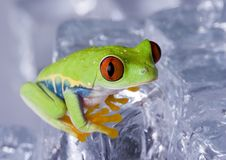 Frosch Stockfotos