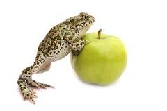 Frosch, Apfel Lizenzfreies Stockfoto