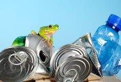 Frosch auf Abfall lizenzfreies stockfoto