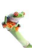 Frosch auf Bambus lizenzfreies stockfoto