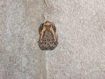 Frosch auf Betonblockwand Stockfotos