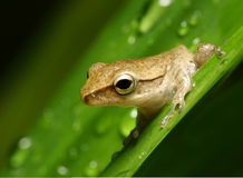 Frosch auf Blatt stockfotos