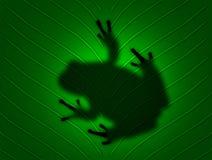 Frosch auf Blatt lizenzfreies stockfoto