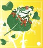 Frosch auf Blattabbildung   Stockfotografie