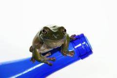 Frosch auf blauer Flasche Stockfotografie