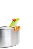 Frosch auf dem Kochen des Potenziometers getrennt Stockfotos