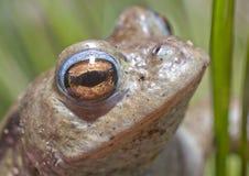 Frosch auf den Banken von einem Teich stockbilder