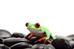 Frosch auf den Felsen getrennt Stockfotografie