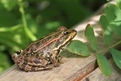 Frosch auf der Bank Stockfotos