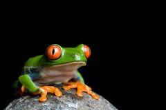 Frosch auf einem Felsen Lizenzfreies Stockfoto