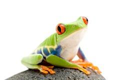 Frosch auf einem Felsen lizenzfreie stockbilder