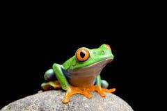 Frosch auf einem Felsen getrennt auf Schwarzem Lizenzfreies Stockfoto
