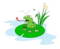 Frosch auf einem Lilypad Stockfoto