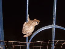 Frosch auf einem Tor Lizenzfreie Stockfotos
