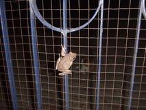Frosch auf einem Tor Stockfotos
