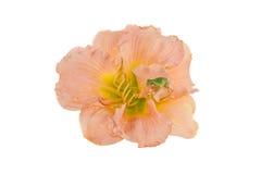 Frosch auf einer Blume. Lizenzfreie Stockfotos