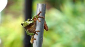 Frosch auf Eisenstange Lizenzfreie Stockfotografie