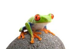 Frosch auf Felsen stockbild