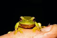 Frosch auf Finger Stockfoto